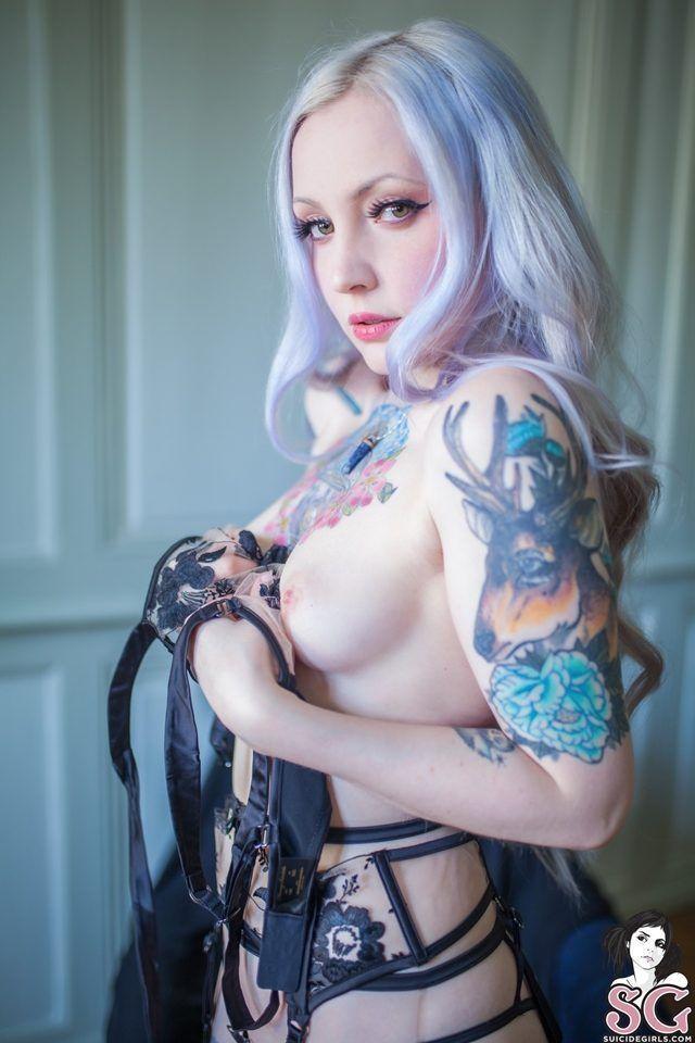 Gatas exóticas peladas se exibindo sem vergonha para câmera